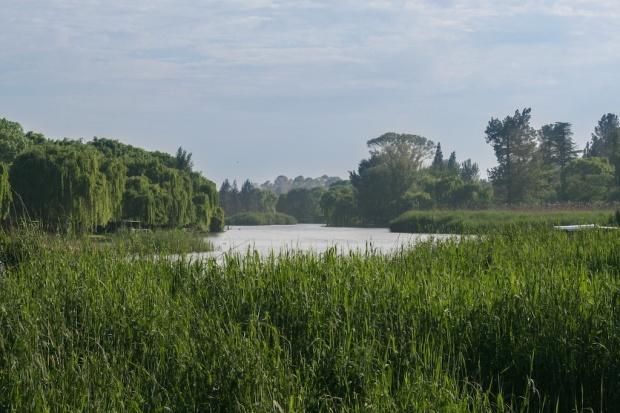 IMG_4086 Henley River