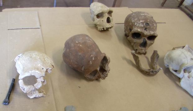 Skulls FlorisB mutations